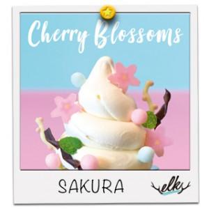 桜咲く春のポップサンデー